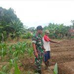 Babinsa Koramil 402-10/Kayuagung Lakukan Pendapingan Pertanian